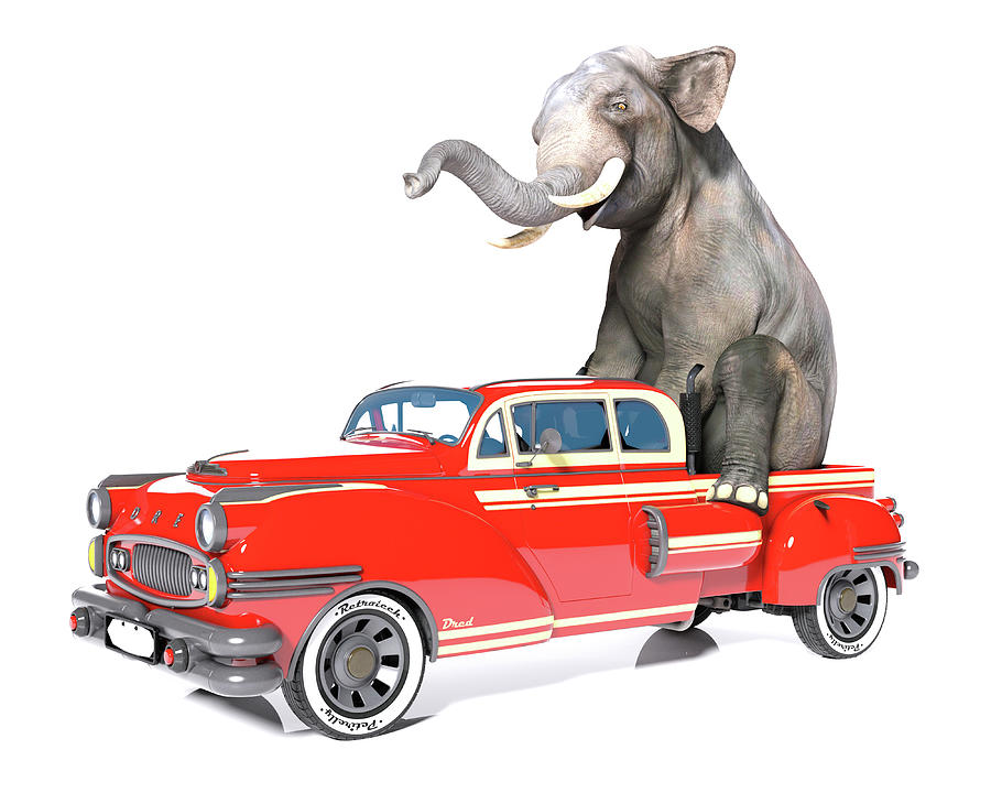 Elephant Digital Art - Cruising  by Betsy Knapp