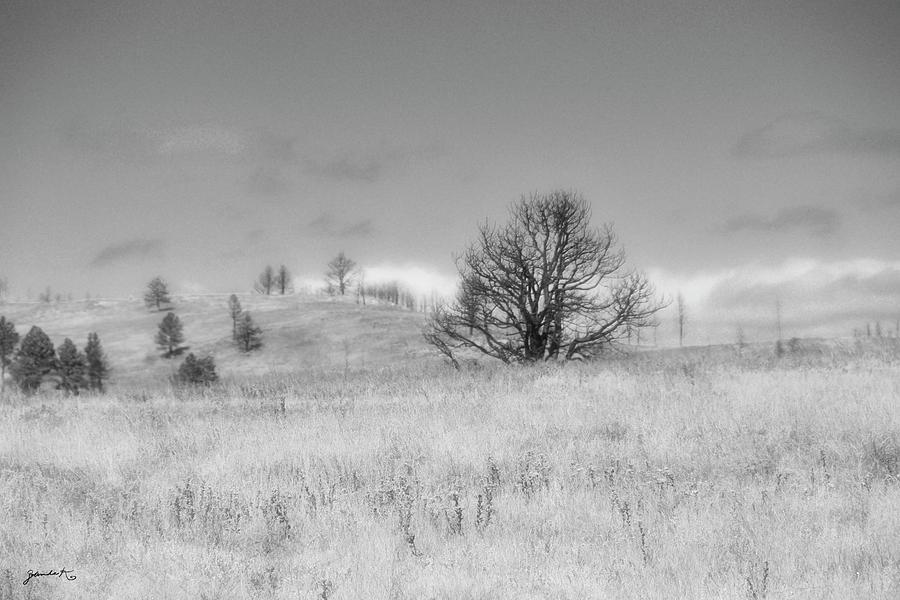 Custer State Park South Dakota by Gerlinde Keating - Galleria GK Keating Associates Inc
