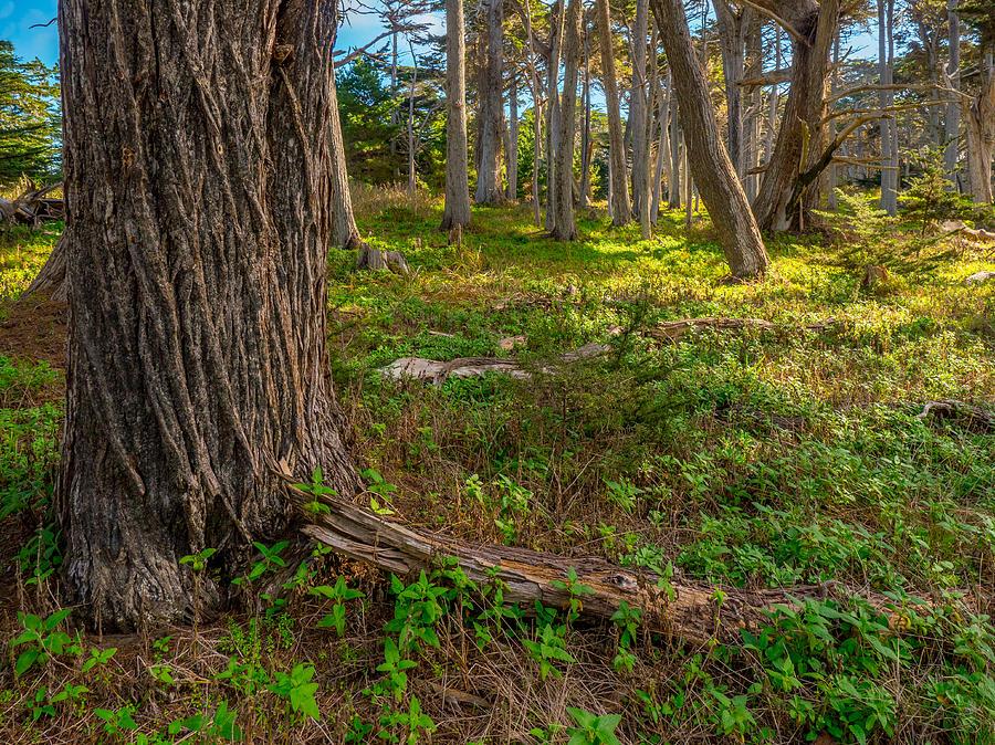 Cypress Point by Derek Dean