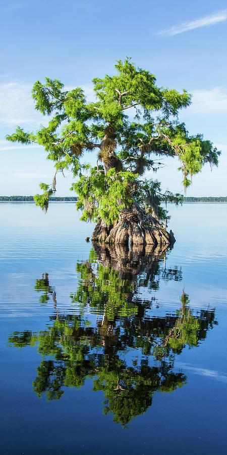 Cypress Reflection by Stefan Mazzola