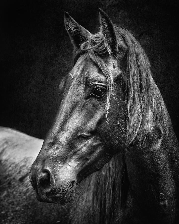 Dark Horse by Ron McGinnis