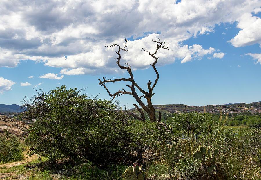Deadwood in the Desert by Amy Sorvillo
