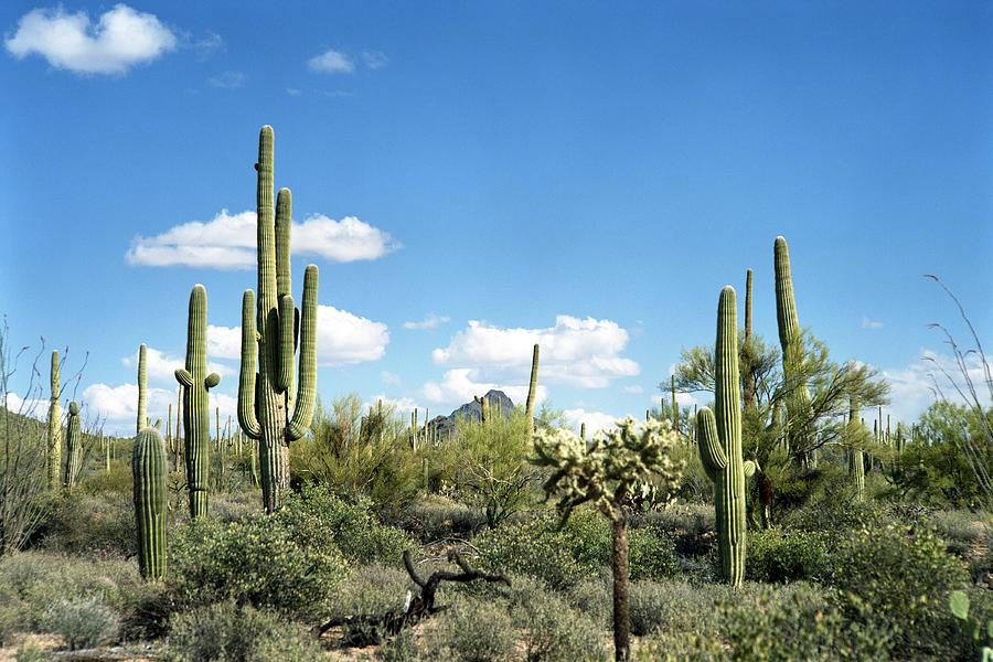 Desert Landscape Photograph by Kingwu