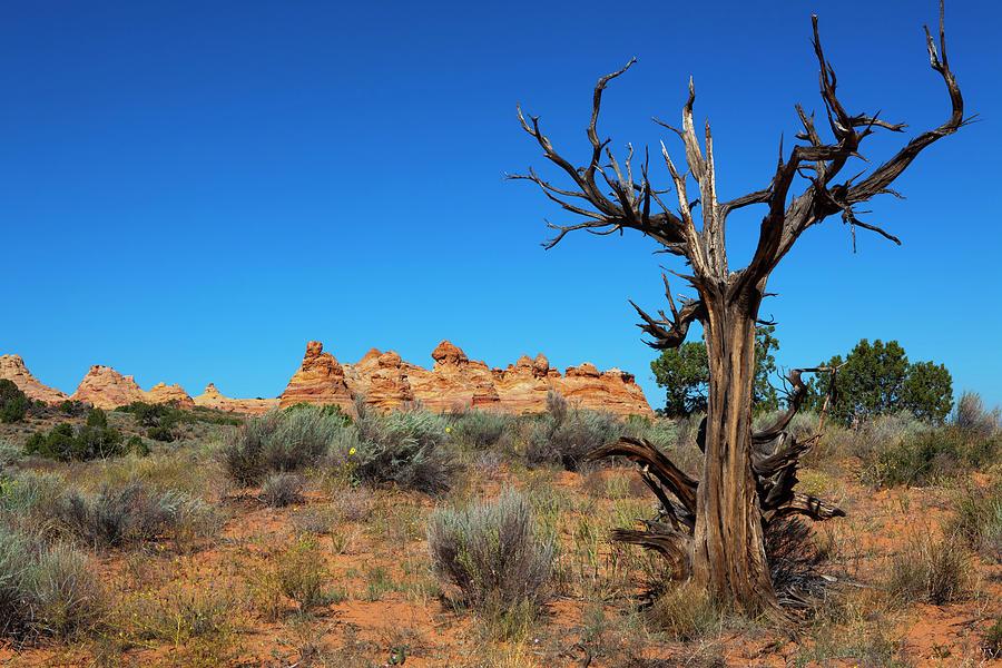 Scenic Photograph - Desert Landscape by Lucynakoch