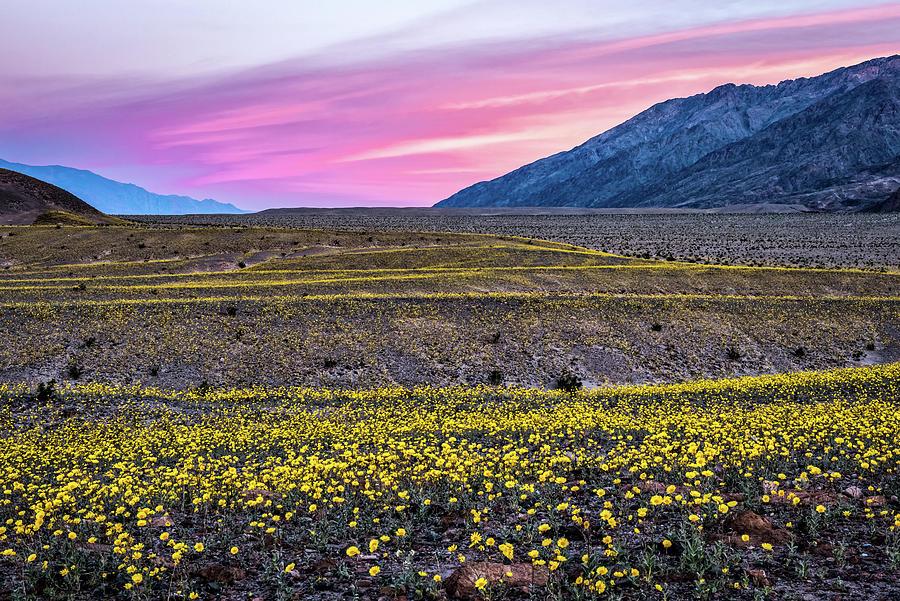 Desert Super Bloom 2016 by George Buxbaum