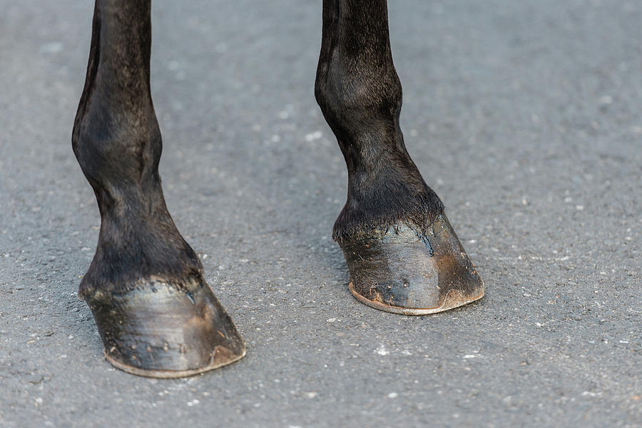 Detail Of The Hooves Of A Black Horse During The Celebration Of The Feast Of Saint George And The Dr Photograph
