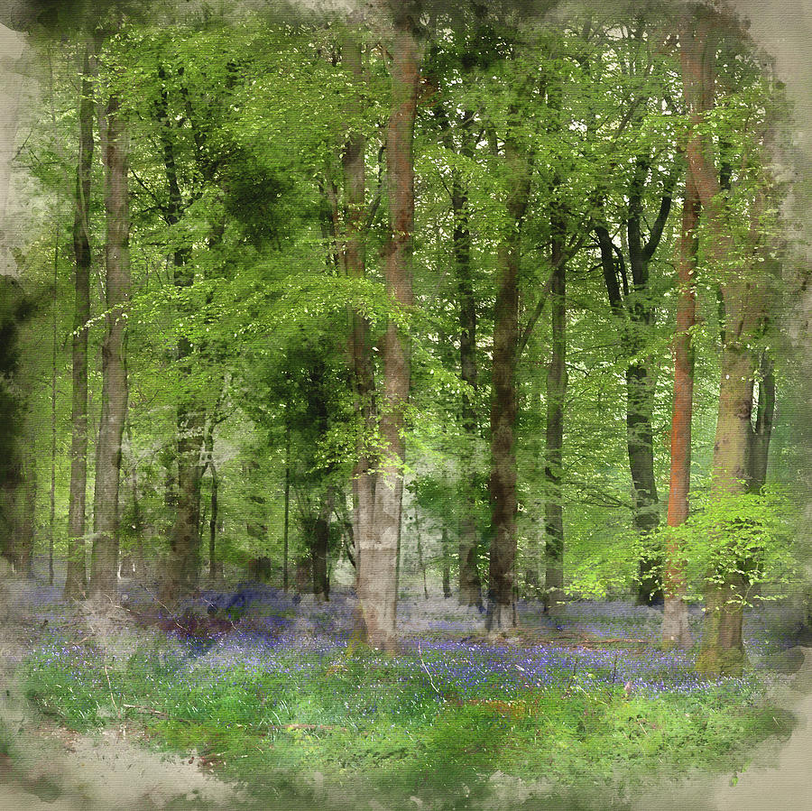 Landscape Photograph - Digital Watercolor Painting Of Stunning Bluebell Forest Landscap by Matthew Gibson