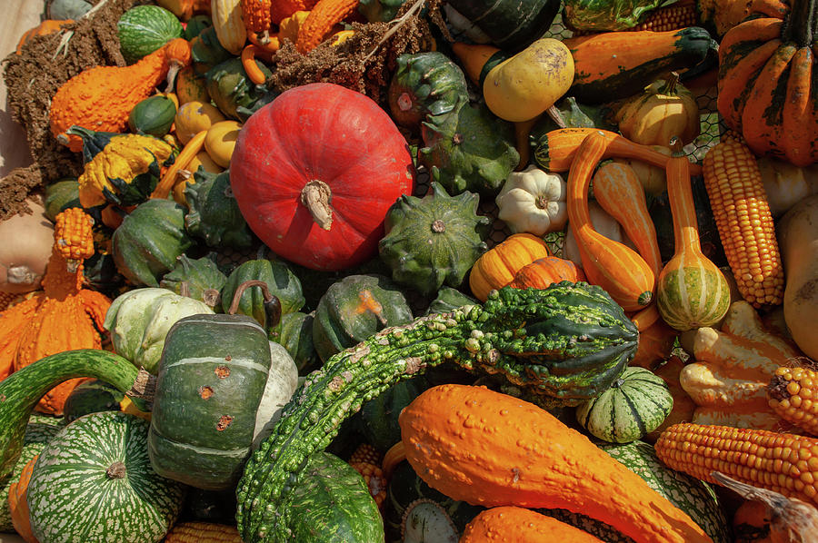 Display Of Colorful Ornamental Gourds And Pumpkins 1 by Jenny Rainbow