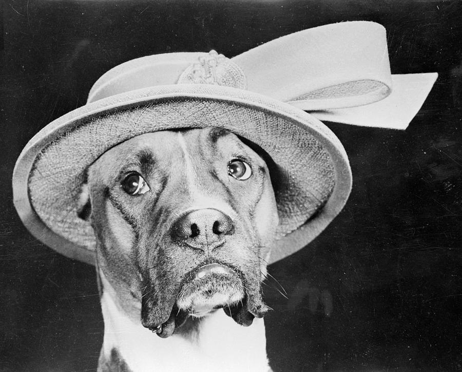 Doggy Hat Photograph by Keystone Features