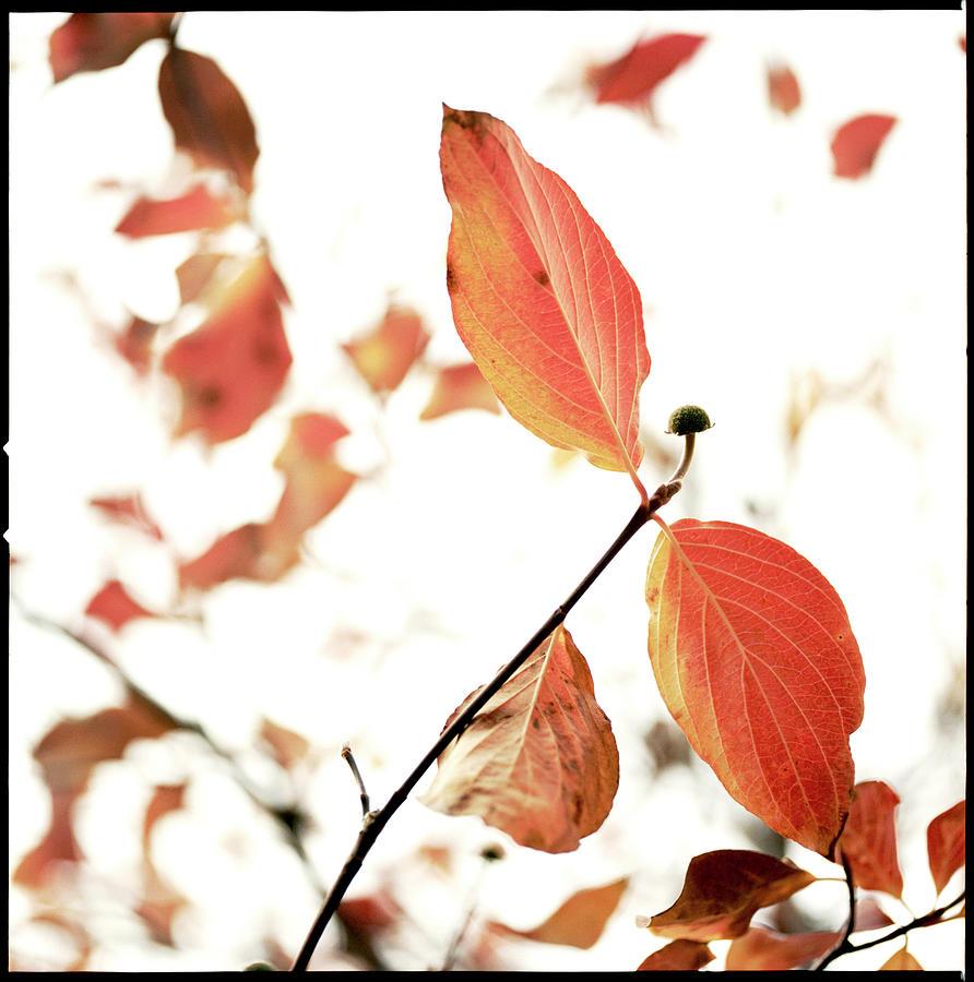 Dogwood Leaves Photograph by Laura A. Watt