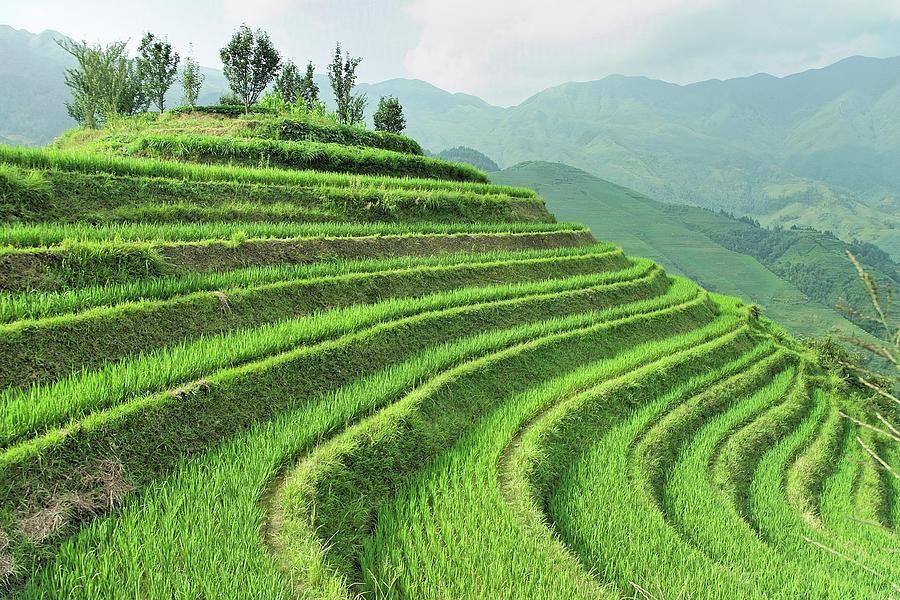 Dragon Backbone Rice Terraces Photograph by (c) Loco Moco Photos