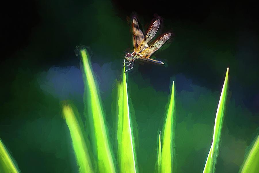 Dragonfly on Spanish Bayonet 102 by Rich Franco