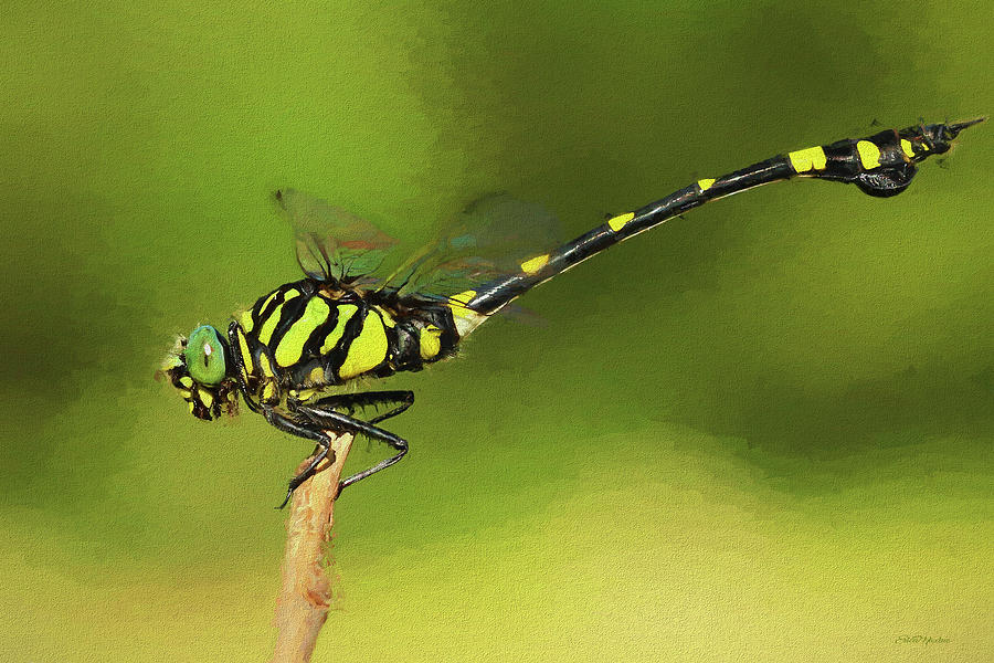 Dragonfly - Painting by Ericamaxine Price