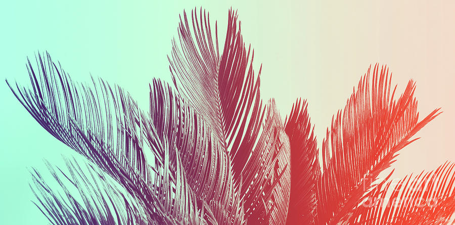 Palm Photograph - Duotone Background Of Tropical Palm Leaves by Michal Bednarek