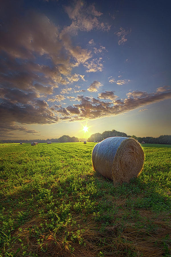 Life Photograph - Early Risen by Phil Koch