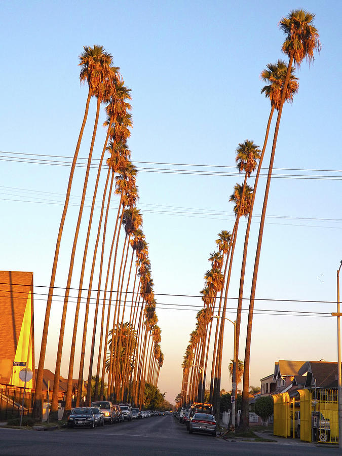 East LA Palm Trees  by Hold Still Photography