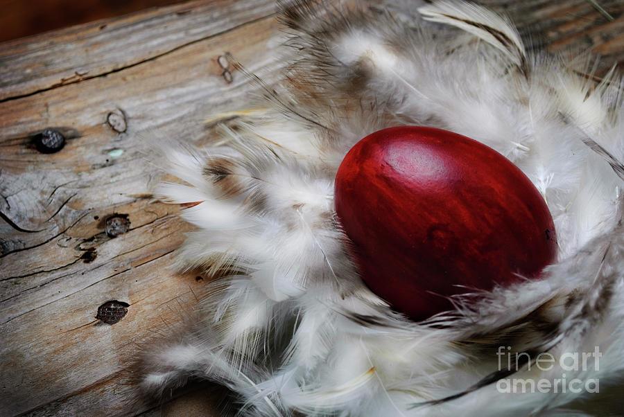 Easter Egg by Jelena Jovanovic