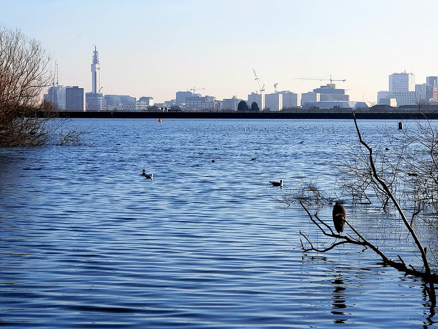 Edgbaston Reservoir by Tony Murtagh