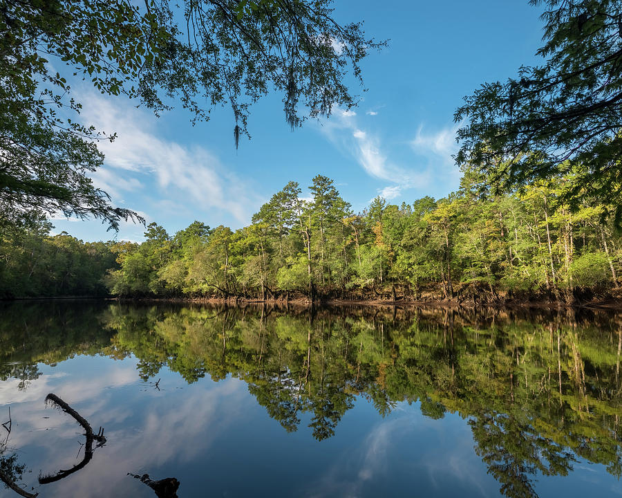 Edisto River by Patrick M Lynch