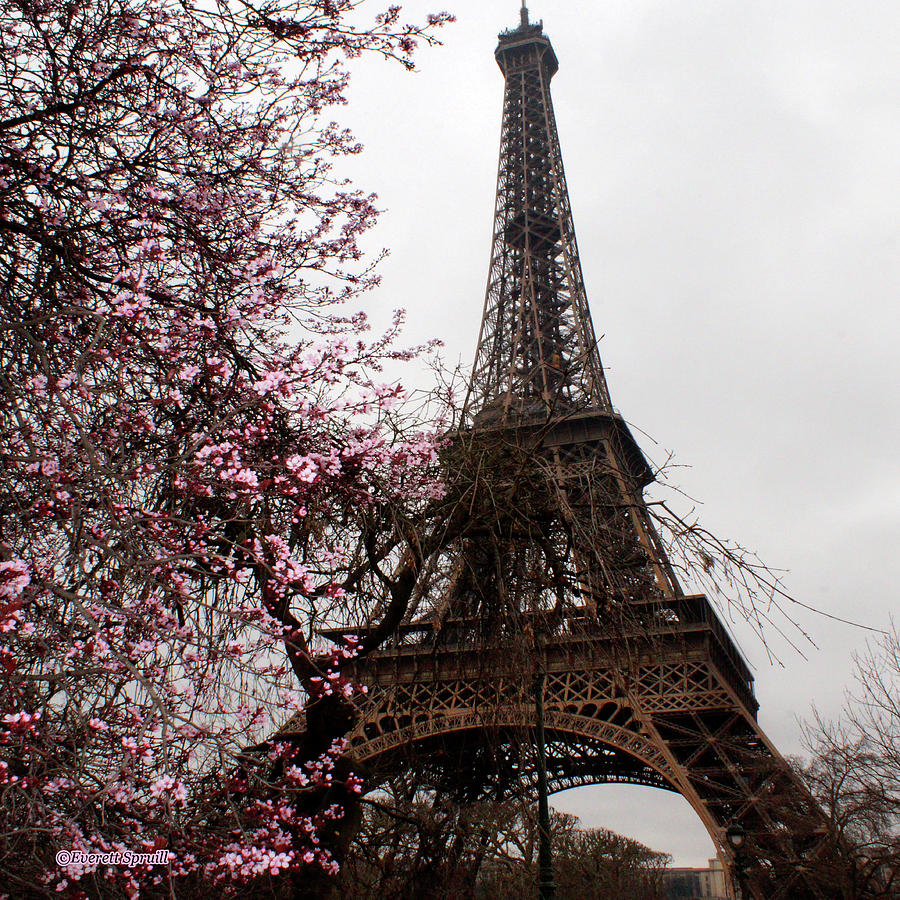 Eiffel Tower 2 by Everett Spruill