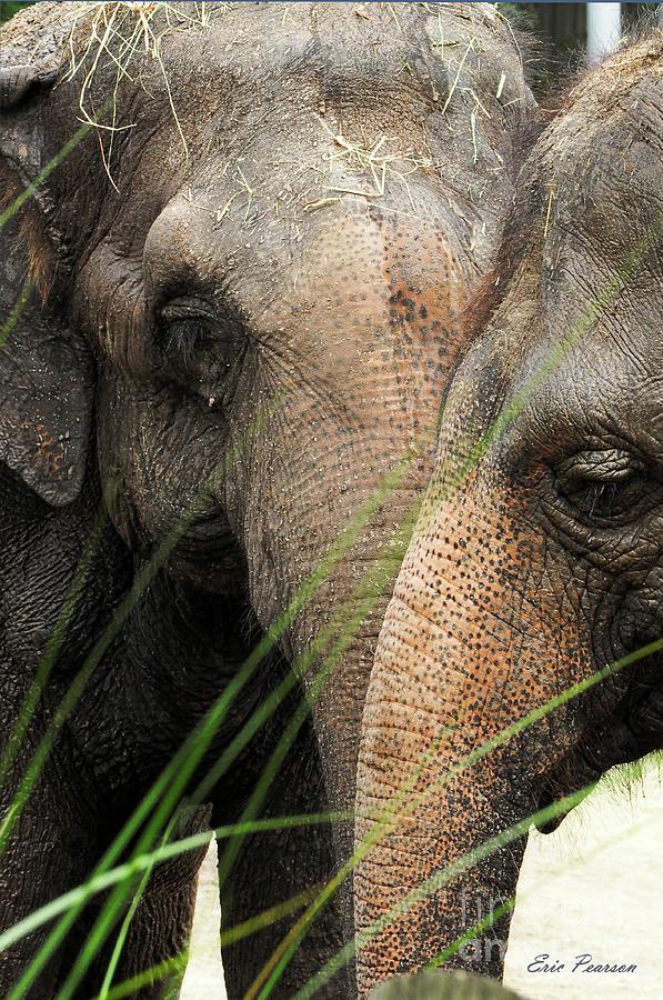 1 Elephant ? by Eric Pearson