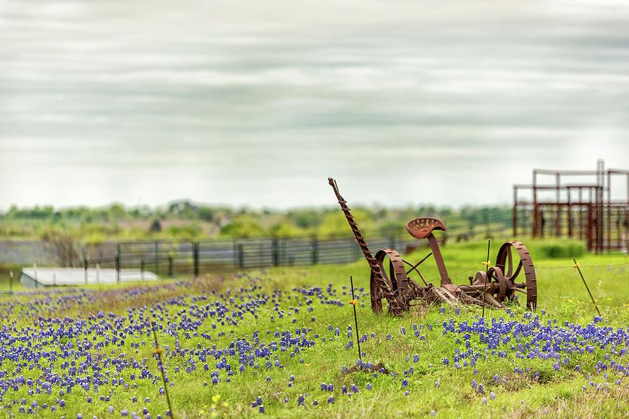 Ellis County Bluebonnets by Victor Culpepper