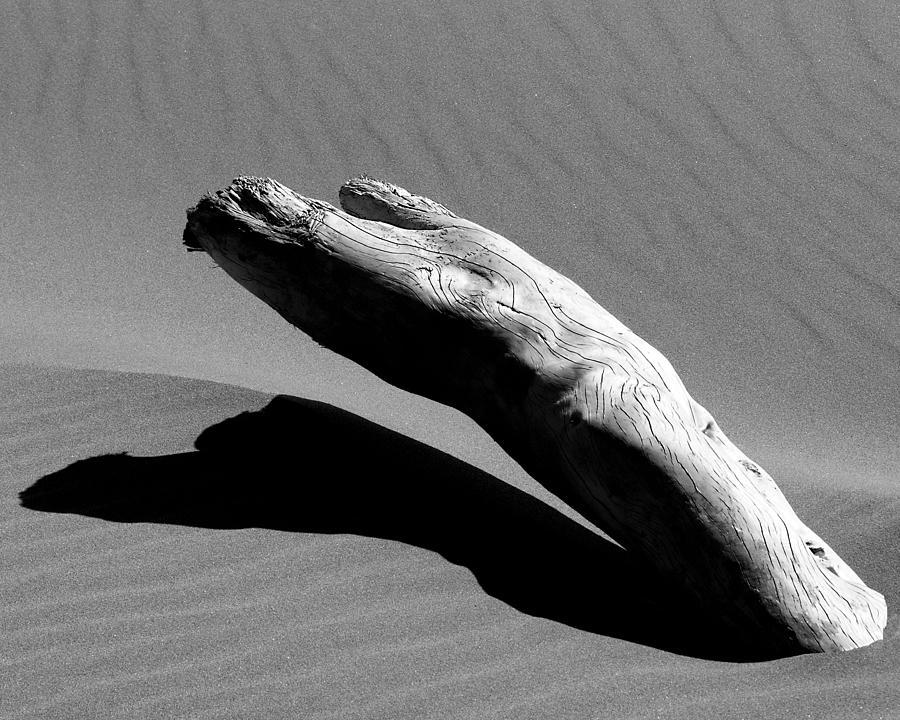 Driftwood Photograph - Ergo by Miron Abramovici
