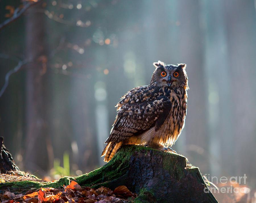 Big Photograph - Eurasian Eagle Owl Bubo Bubo Sitting On by Vladimir Hodac
