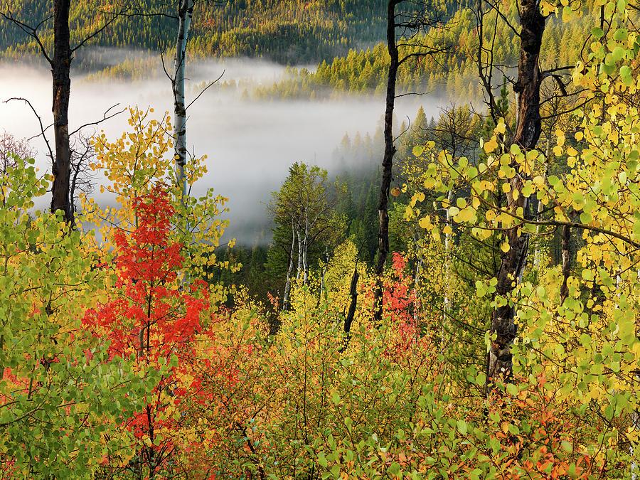 Aspen Forest Photograph - Fall Morning 2 by Leland D Howard