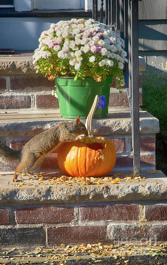Feasting on Pumpkin  by Ruth H Curtis