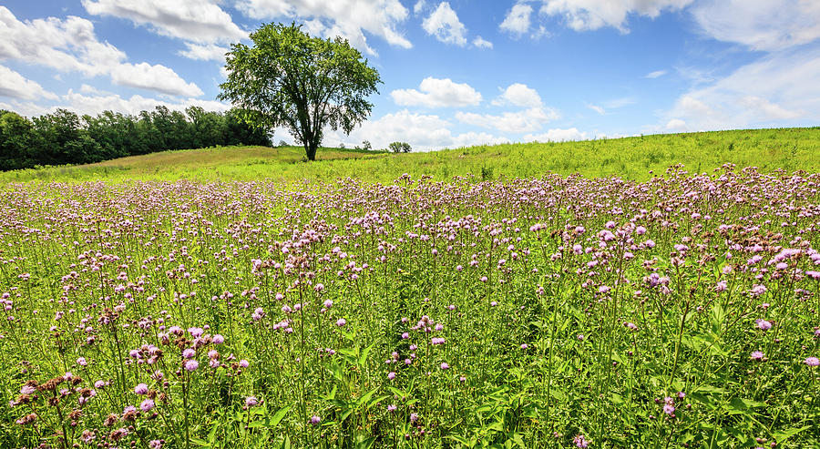 Field Of Wildflowers In Kentucky Photograph