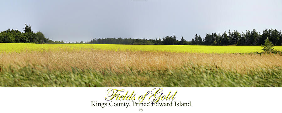 Fields of Gold by John Meader