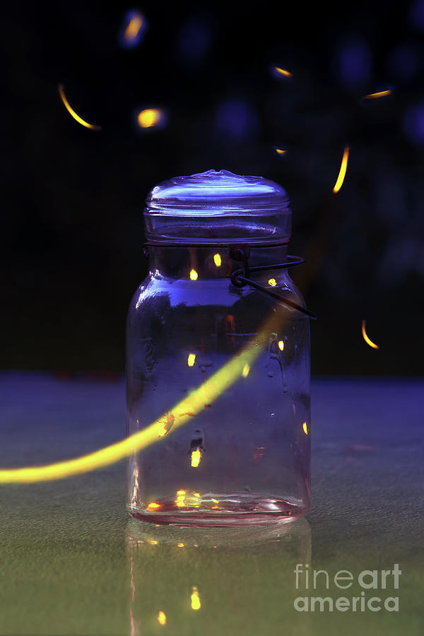 Does finding that micro-moment feel like chasing fireflies ... |Fireflies In A Jar Cover Photo