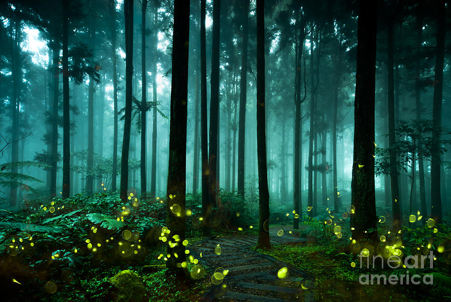 Forest Photograph - Firefly by Htu
