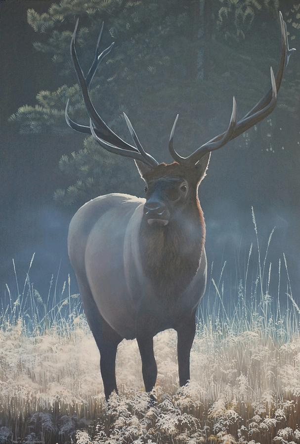 First Light - Bull Elk by Peter Mathios