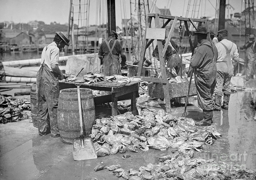 FISH INDUSTRY, c1905 by Granger