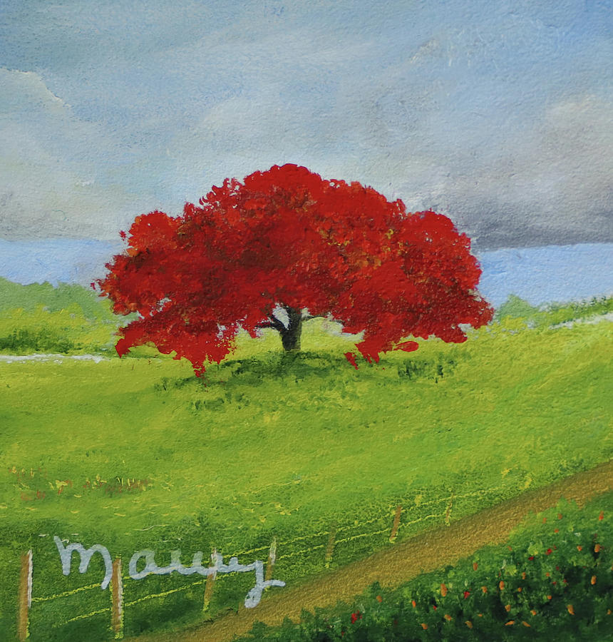 Flamboyant Near The Road by Alicia Maury