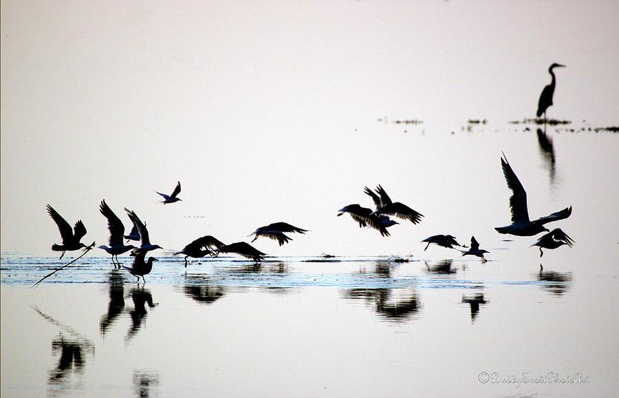 Flight by Buddy Scott