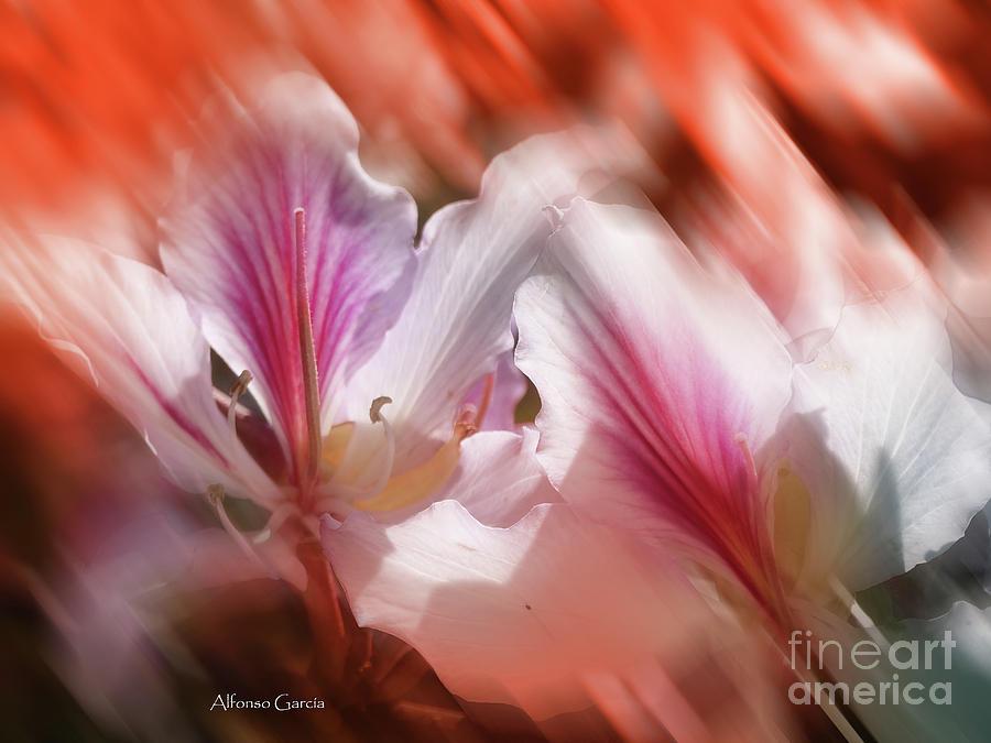 Flores de Andalucia by Alfonso Garcia
