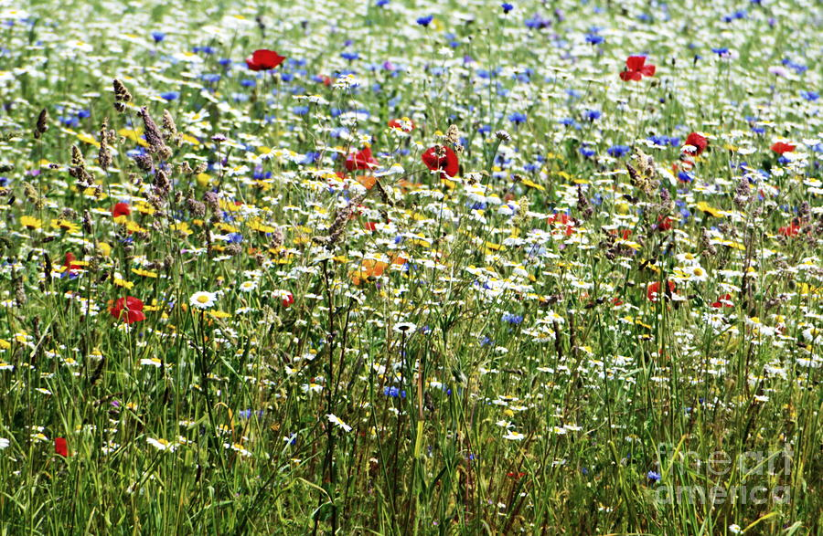Flower Photograph - Flower Meadow by Andy Thompson