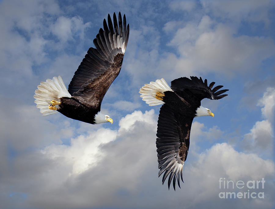 Fly Like An Eagle Photograph - Fly Like An Eagle by Bob Christopher