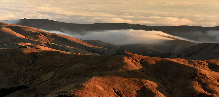 Fog over Golden Hills by Cindy McIntyre