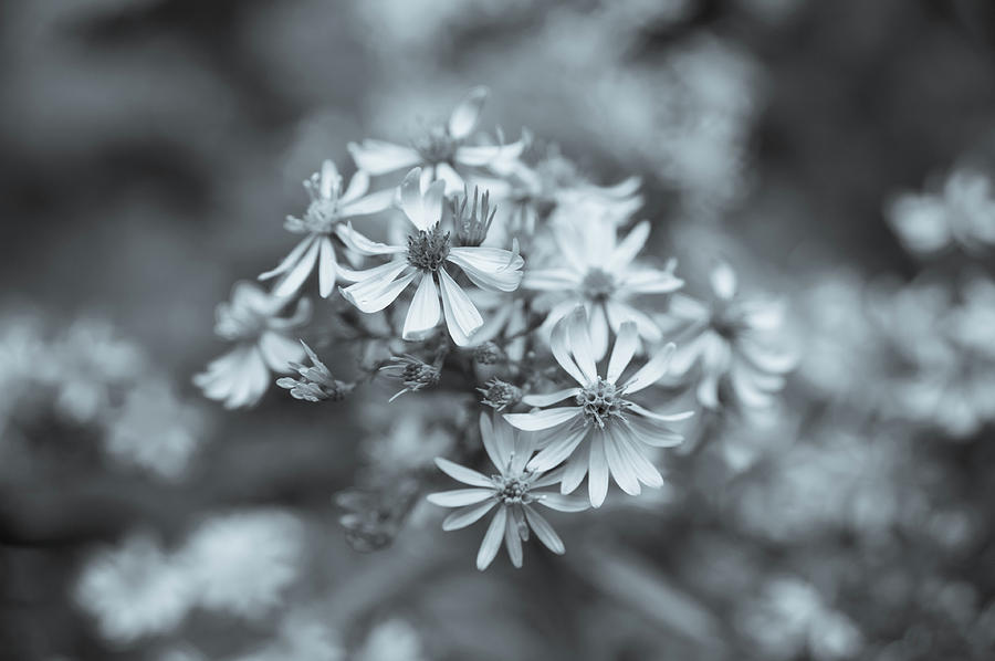 Forest Wild Flowers by Miguel Winterpacht