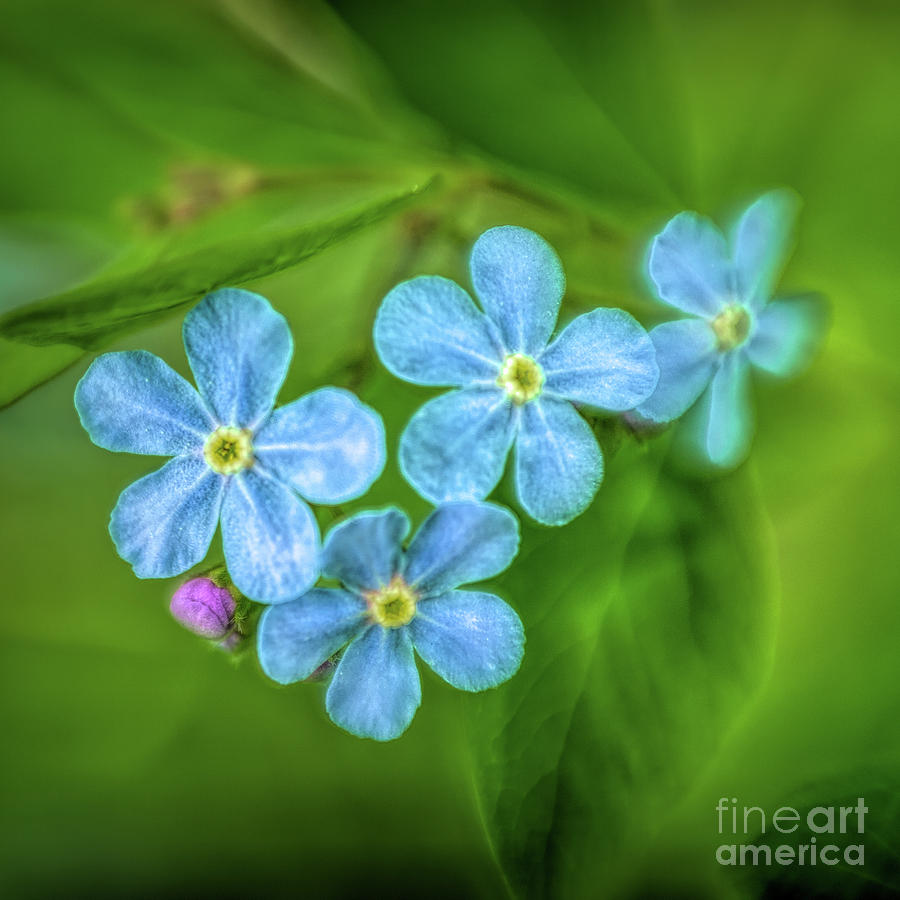 Forget Me Not by Roxie Crouch