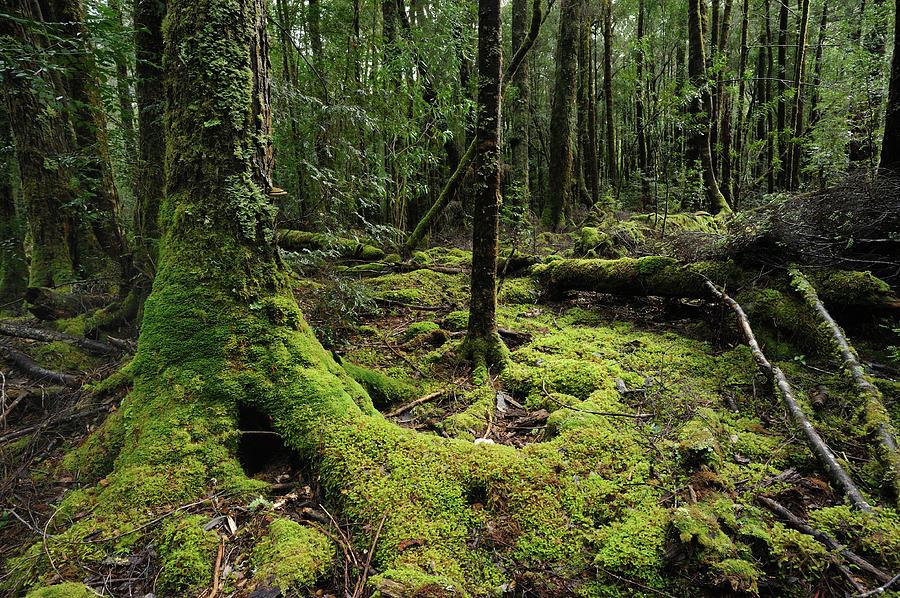 Franklin-gordon Wild Rivers National Photograph by Keiichihiki