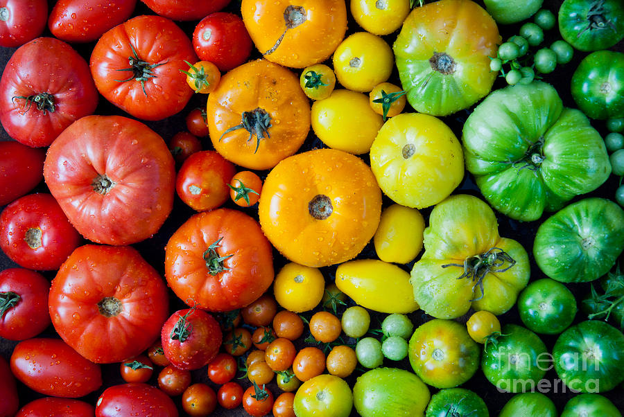 Beauty Photograph - Fresh Heirloom Tomatoes Background by Letterberry
