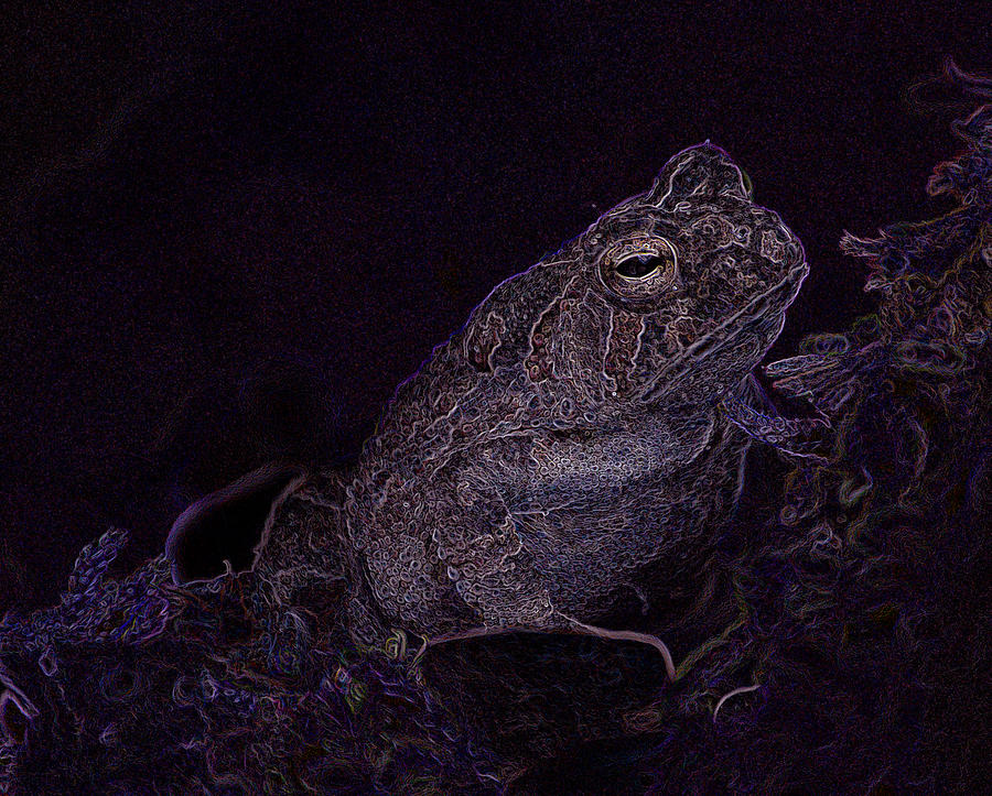 Frog Prince of The Moss by Lesa Fine