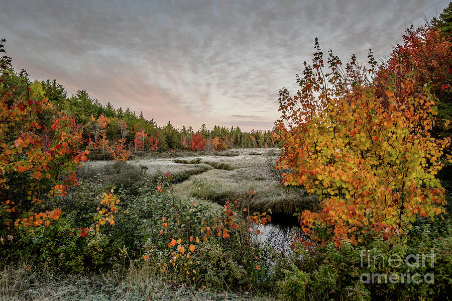 Frosty Fall Morning by Susan Garver
