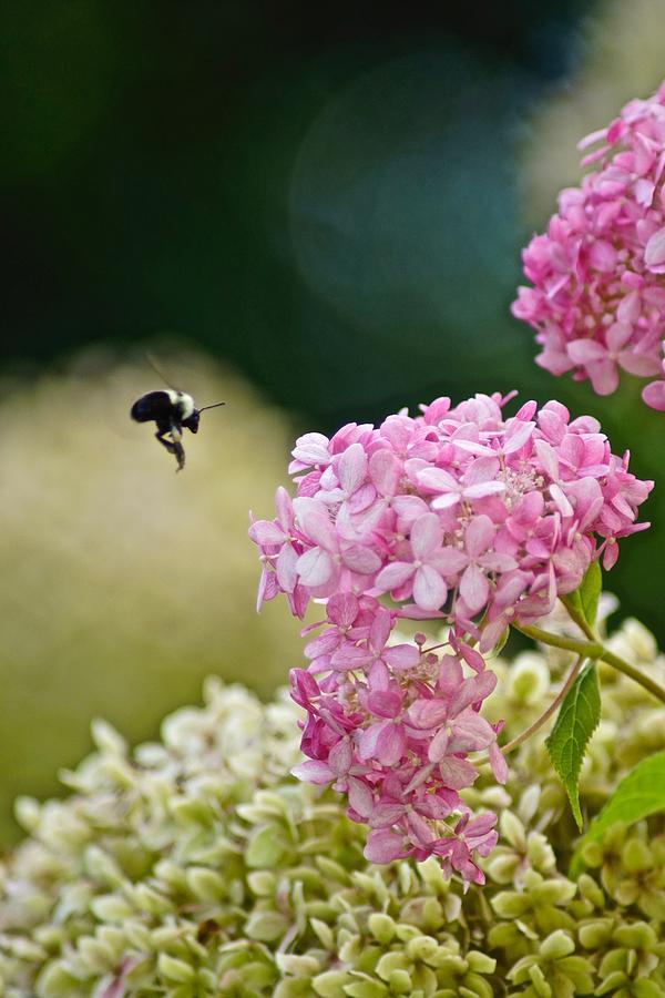 Summer Photograph - Garden by Gillis Cone