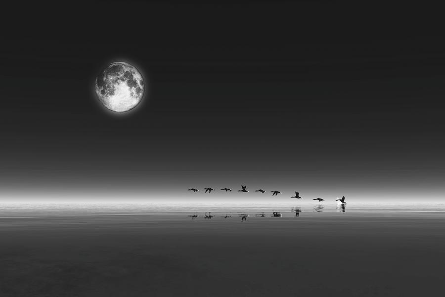 Geese by Jan Keteleer